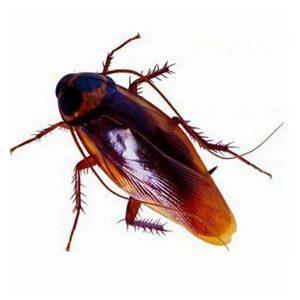 Ψεύτικη Κατσαρίδα Fake Cockroach